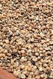 Bali : Coffee bean raw Stock Photo