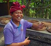 Bali Coffee Grower Displays Kopi Luwak. Stock Image