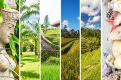 Bali collage fotografering för bildbyråer