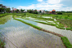 Bali counryside with rice terraces Royalty Free Stock Photos