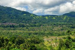 Bali countryside with rice paddy and forest Stock Photo