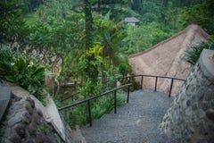 Bali-Erholungsort unter Reisfeldern lizenzfreies stockbild