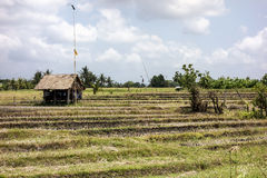 Bali Farm And Rice Paddies Royalty Free Stock Image