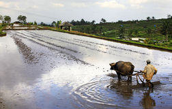 Bali farmer Royalty Free Stock Images
