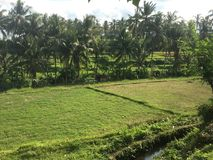 Bali Farms in Indonesia Royalty Free Stock Photography