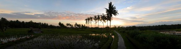 bali fields ricesolnedgång arkivfoton