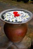 Bali flowers Royalty Free Stock Photos