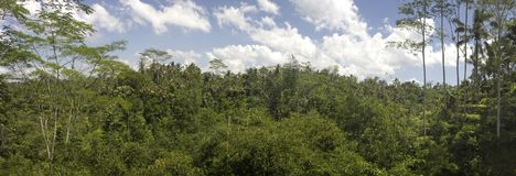 Bali forest panoramic photo. Balinese forest panoramia. Blue sky with clouds stock photography