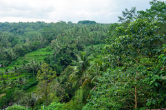 Bali forest and rice field Royalty Free Stock Photo
