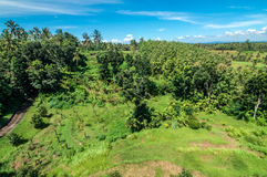 Bali forest and rice field Royalty Free Stock Photography