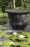 Bali Fountain. A fountain in a lotus pond near Ubud, Bali royalty free stock image