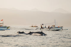 Bali free Dolphin Watching boat Lovina Beach  Stock Photography