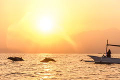 Bali free Dolphin wildlife Watching boat Lovina Beach. Bali Indonesia free wildlife Dolphin boat Watching at Lovina Beach stock photo