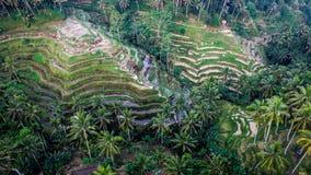 Bali Harvest Season II Royalty Free Stock Photos
