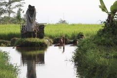 Bali, Indonésia, 03 11 2015: As crianças banham-se no canal no campo do arroz Imagem de Stock
