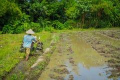 BALI, INDONÉSIA - 5 DE ABRIL DE 2017: Fazendeiro que cleanning a área para plantar algumas sementes do arroz em uma terra inundad Fotos de Stock Royalty Free