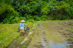 BALI, INDONÉSIA - 5 DE ABRIL DE 2017: Fazendeiro que cleanning a área para plantar algumas sementes do arroz em uma terra inundad Fotografia de Stock