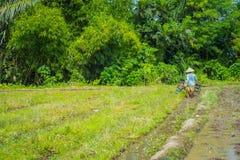 BALI, INDONÉSIA - 5 DE ABRIL DE 2017: Fazendeiro que cleanning a área para plantar algumas sementes do arroz em uma terra inundad Imagens de Stock