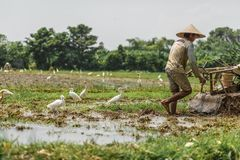 Bali/Indonésia - 03 05 2018: o homem ara o campo com grande um motor-bloco imagem de stock