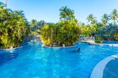 BALI, INDONÉSIE - 29 AOÛT 2008 : Touristes nageant dans énorme Photos stock