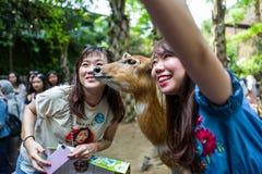 Bali, Indonésie - 22 mars 2018 : Femmes faisant le selfie avec des cerfs communs dans le zoo de Bali Photo stock