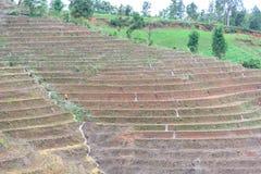 bali Indonésie a photographié la terrasse de riz Photographie stock libre de droits