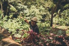 BALI, INDONESIË - DECEMBER 5, 2017: Portret van de oude Aziatische Balinese landbouwersmens in het werk stock afbeelding