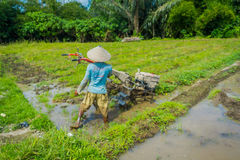 BALI, INDONESIA - APRIL 05, 2017: Farmer cleanning the area to plant some rice seeds in a flooded land in terraces, Ubud Royalty Free Stock Images