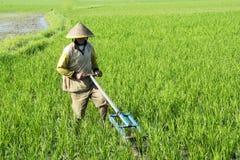 Male farmer using a wooden harrow in Bali royalty free stock image