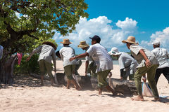 BALI, INDONESIA - APRIL 26, 2017: Paradise beach workers bringing a big tree on Bali island, Indonesia. Stock Images