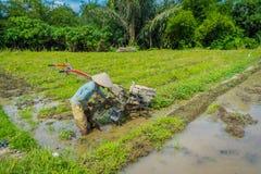 BALI, INDONESIA - 5 APRILE 2017: Agricoltore che cleanning l'area per piantare alcuni semi del riso in una terra sommersa in terr Immagine Stock