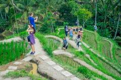 BALI, INDONESIA - 5 APRILE 2017: Gente non identificata che gode di bello paesaggio con i terrazzi verdi del riso vicino Fotografie Stock Libere da Diritti