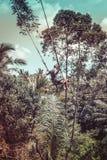 BALI, INDONESIA - 5 DE DICIEMBRE DE 2017: Hombre turístico joven que balancea en el acantilado en la selva tropical de la selva d Fotografía de archivo libre de regalías