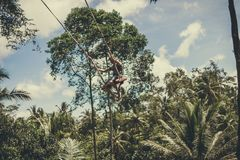 BALI, INDONESIA - 5 DE DICIEMBRE DE 2017: Hombre turístico joven que balancea en el acantilado en la selva tropical de la selva d Foto de archivo libre de regalías