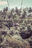 BALI, INDONESIA - 5 DE DICIEMBRE DE 2017: Hombre turístico joven que balancea en el acantilado en la selva tropical de la selva d Fotos de archivo