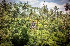 BALI, INDONESIA - 5 DE DICIEMBRE DE 2017: Hombre turístico joven que balancea en el acantilado en la selva tropical de la selva d Foto de archivo
