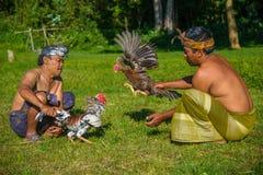 Bali, Indonesia - 2 de mayo de 2014 - aldeanos indonesios de Unindentified demostrating una pelea de gallos efectuada Imagen de archivo