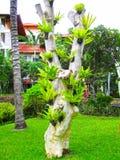Bali, Indonesia - December 25, 2008: The park in Ayodya Resort Stock Photos