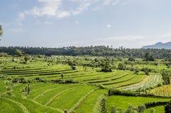 Bali, Indonesia stock image
