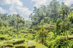 Bali, Indonesia royalty free stock images