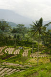 Bali, Indonesia Farmland. Besides rice, other crops such as peas, beans, and peanuts also grow well in this tropical environment Royalty Free Stock Photo