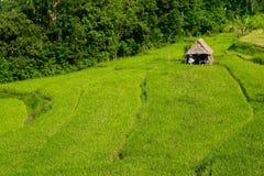 bali indonesia fotograferad riceterrass Arkivbilder