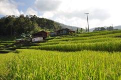 bali indonesia fotograferad riceterrass Royaltyfri Bild