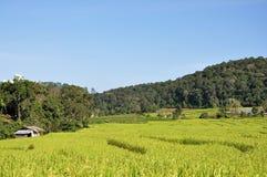 bali indonesia fotograferad riceterrass Royaltyfri Fotografi