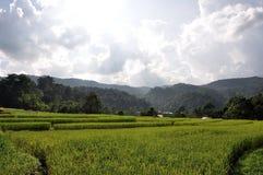 bali indonesia fotograferad riceterrass Royaltyfria Bilder