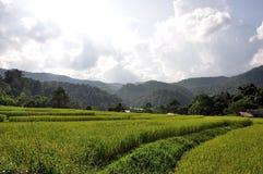 bali indonesia fotograferad riceterrass Arkivfoto