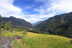 bali indonesia fotograferad riceterrass Arkivbild