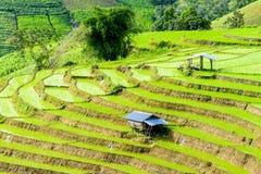 bali Indonesia fotografujący ryż taras Zdjęcie Royalty Free