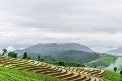 bali Indonesia fotografujący ryż taras Fotografia Stock