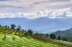bali Indonesia fotografujący ryż taras Zdjęcia Stock